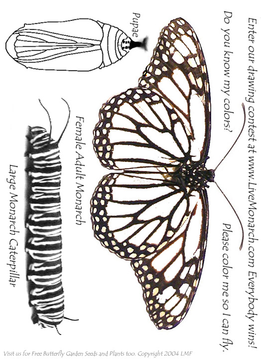Stunning Monarch Caterpillar Coloring Page Photos New Printable